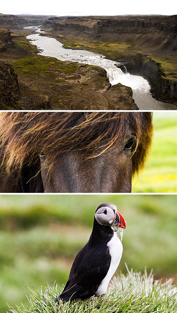 Waterfall, hores, puffin in Iceland | www.strudelandcream.com